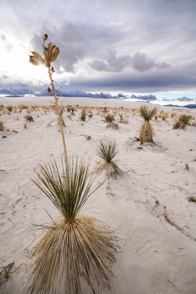Dal bianco della neve al bianco della sabbia chiricahua for Vento di sabbia silver
